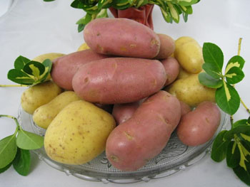 Bkk autrement les legumes et epices - Pomme de terre germee comestible ...